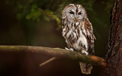 Vögel beobachten und bestimmen – diese Ausrüstung brauchst du