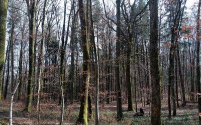 Baden in der Waldathmosphäre