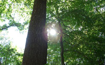 Facts über den Schweizer Wald
