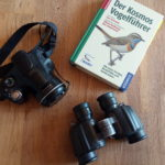 12 Begriffe, die du kennen solltest, wenn du Vögel beobachten und bestimmen willst
