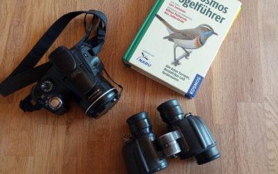 Der Weg zum Birding-Profi: Wie auch du mit wenigen Hilfsmitteln Vögel beobachten und bestimmen kannst!