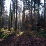 Zurück zu den Wurzeln oder warum uns der Wald so gut tut - 3 Tipps für einen erholsamen Wald-Besuch