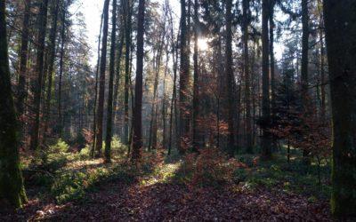 Bäume kommunizieren