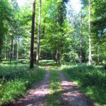 Ein Waldrundgang in Bildern - Sommer 2020