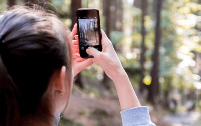 Die 3 besten Apps zum Vögel bestimmen