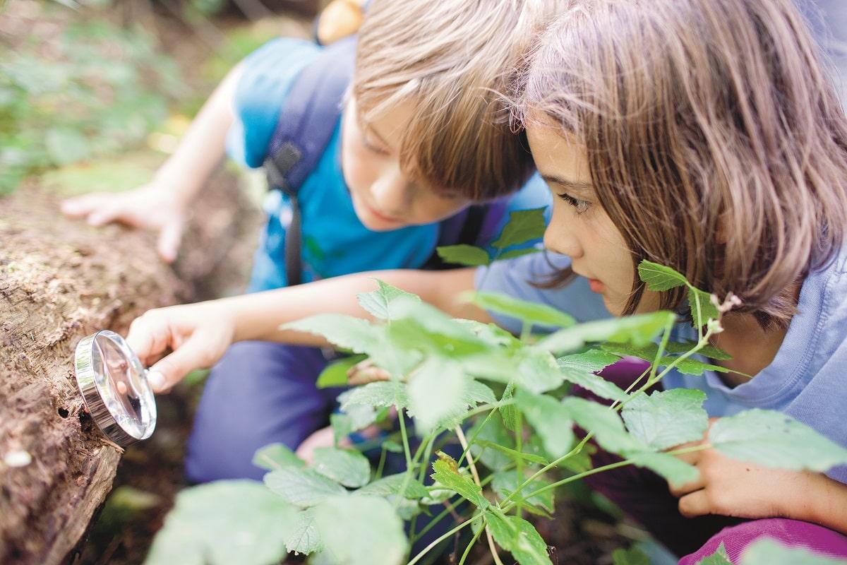 Junior Ranger erforschen den Wald.