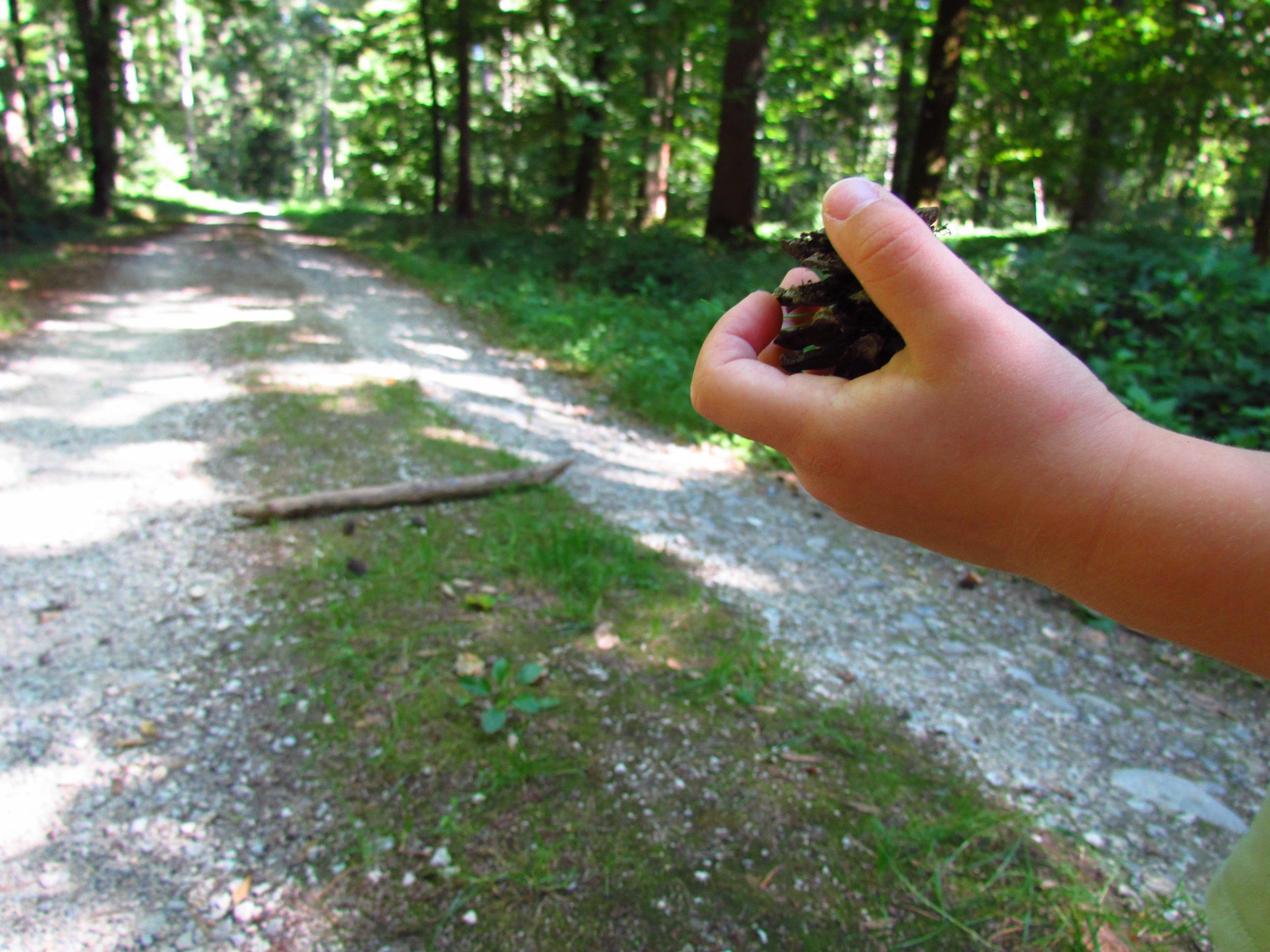 Mit Zapfen im Wald spielen.