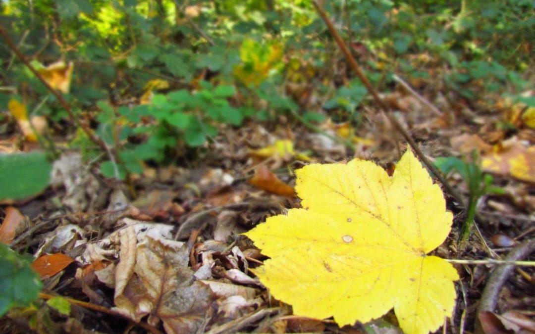 3 spannende Natur-Blogs für Familien und Kinder