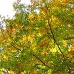 Ein Waldrundgang in Bildern - Herbst 2020