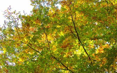 Ein Waldrundgang in Bildern – Herbst 2020