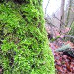 Ein Waldrundgang in Bildern - Winter 2021