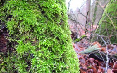 Ein Waldrundgang in Bildern – Winter 2021