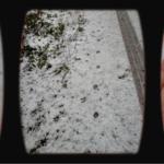 Spuren im Schnee - so erkennst du Trittsiegel von Fuchs, Wildschwein und Reh