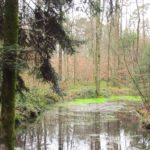 Märchen und Sagen aus dem Wald