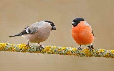 Was ist eigentlich der Unterschied zwischen einem Birder und einem Ornithologen – oder warum ich mich lieber Ornithologin nenne